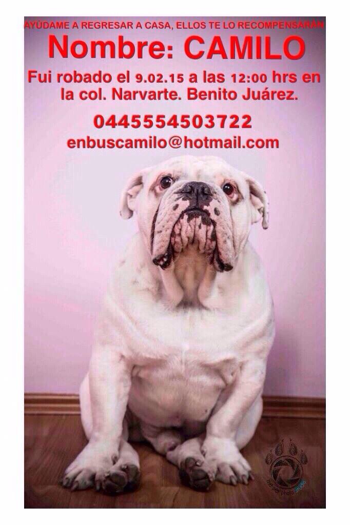 Vaitiare Mateos Bear (@vaitiaremateos): Nos ayudan a encontrar a Camilo??? RT Porfa! http://t.co/k0sUwJLDXk