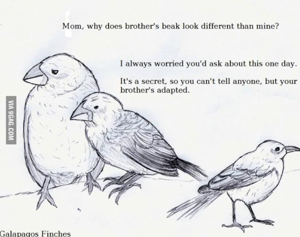 A bit of evolutionary humor for your Friday afternoon: http://t.co/91IWkpBAGX