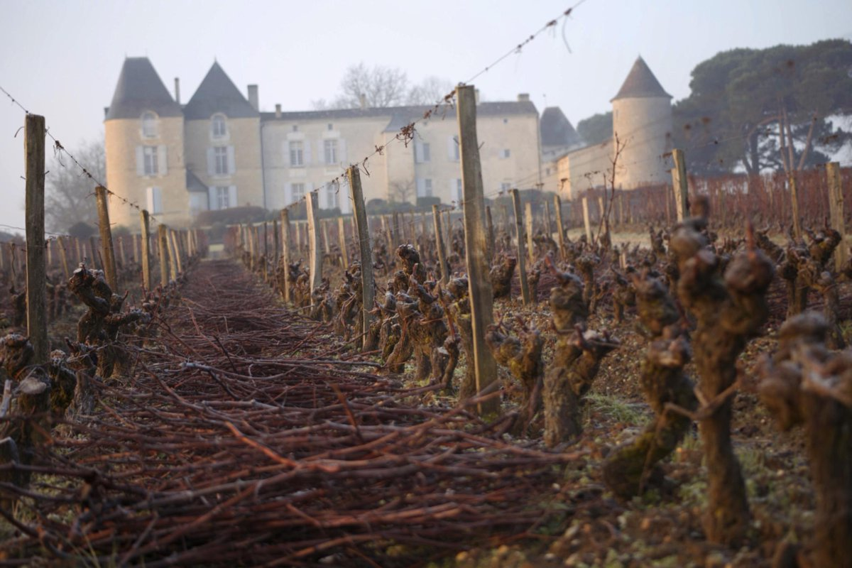 Shredded, then composted, the vine cuttings will be returned to fertilise the soil in 2016. http://t.co/GGRooUOuZ6