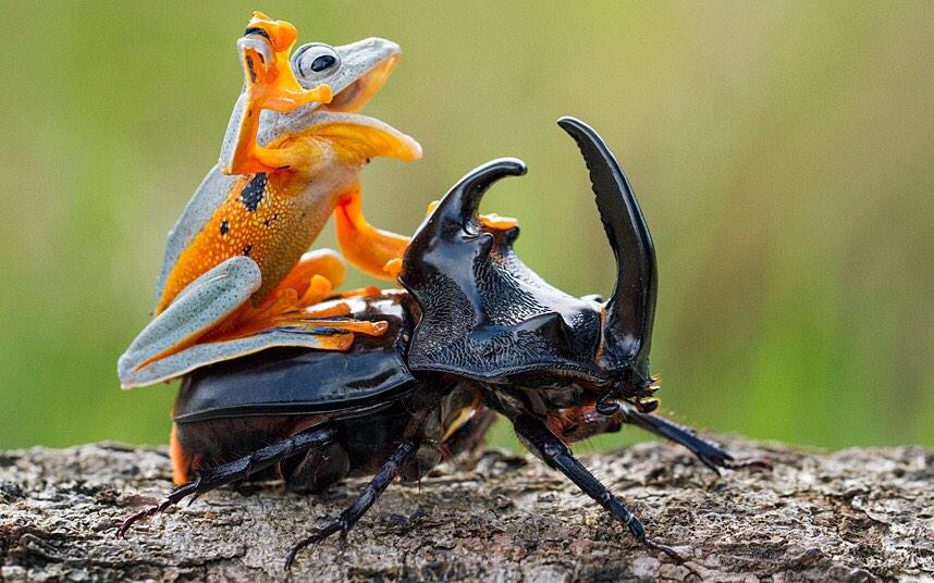 And I looked, and behold, a dark beetle! And its rider's name was Death, and he was a frog. http://t.co/4J5bC2fF7x