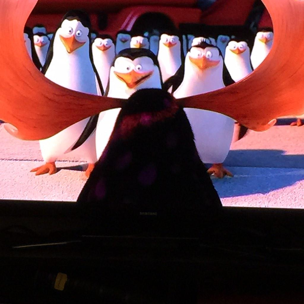 MAJESTIC!! Lol #PenguinsOfMadagascar #PenguinsMovieParty http://t.co/g8rtDqe6uf