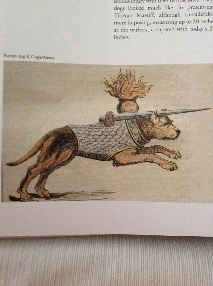 Roman sword dog - basically a precursor to sharks with laser beams http://t.co/qILiWrLW8Z