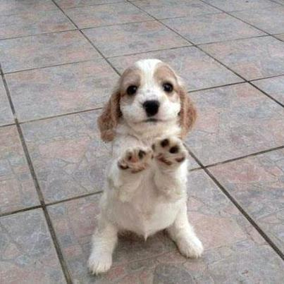 Show of paws, who is ready for the weekend? http://t.co/dPbNMmh7