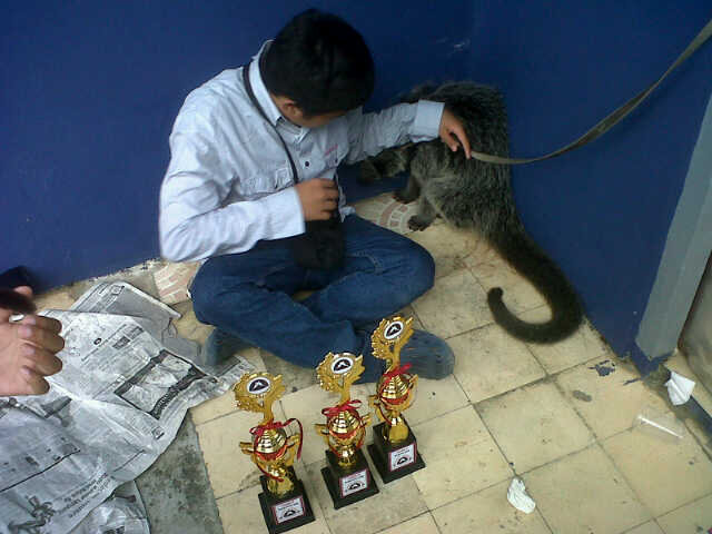 Musang Jinak juara 2 Musang Jinak juara 3 Musang unik juara 2 http://t.co/n4Wg7nkj