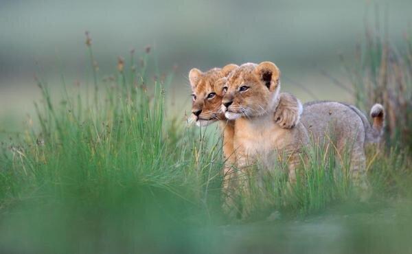 La amistad verdadera no es estar ahí cuando es conveniente; es estar ahí cuando no lo es. http://t.co/kUPOdKun
