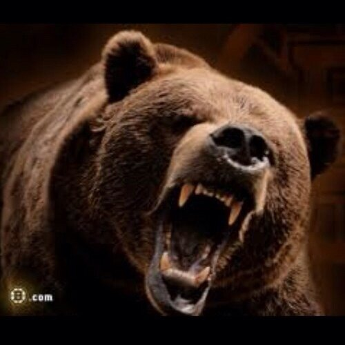 Don't poke the bear!!!!!!!!! #BostonBruins http://t.co/AVbjY08d