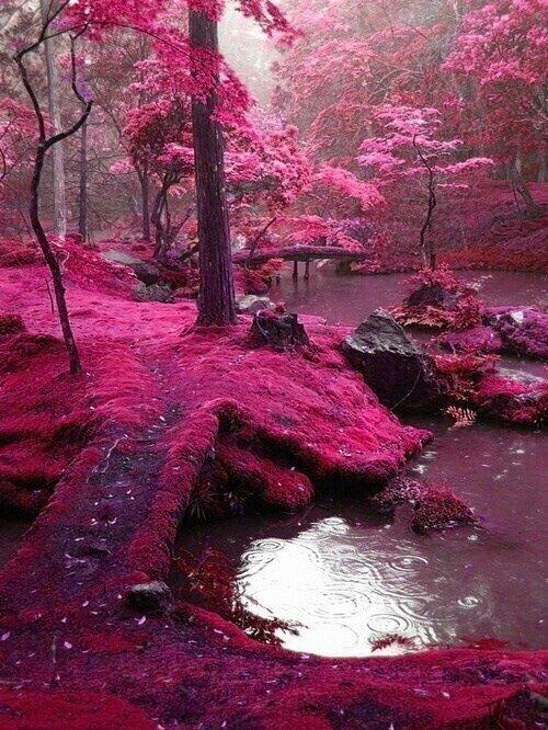 Los famosos ''Puentes de Musgo Rosa'', Irlanda. http://t.co/VDzuoFzO
