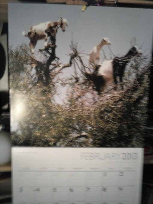"Oh yeah my goats in trees. <a class=""linkify"" href=""http://t.co/F8B1cZ3N"" rel=""nofollow"" target=""_blank"">http://t.co/F8B1cZ3N</a>"