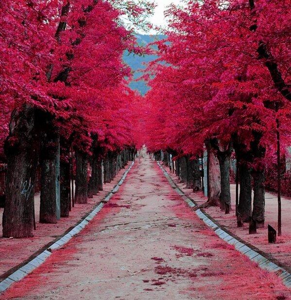 El Escorial, Madrid. España. http://t.co/eT55G3tLuq