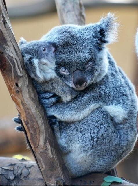 El poder de un abrazo. http://t.co/kkPDPo76rL