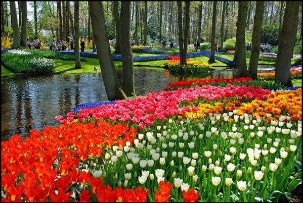 Сад тюльпанов http://t.co/W3VL1foN