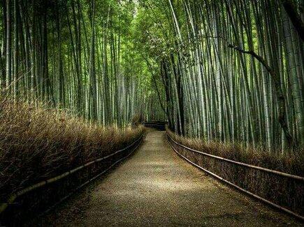 Bosque de Bambú, Japón. http://t.co/thLBvdva