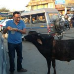 A cow was after my producer Shobu asking for his kachori.It didn't leave him until he gave up..:) Barr, Pali district http://t.co/jexR4gBj
