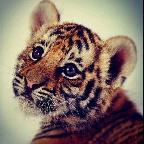 Cutee #schattigedieren http://t.co/cTVNHsnQ8L