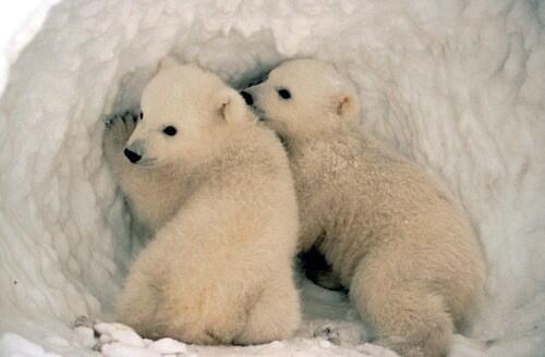❤RT als je ze schattig vindt! #schattigedieren http://t.co/Faz1AKqukN