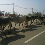 As the wedding convey made for the fort, we came across some highway traffic. Didnt see these models at the Auto Expo