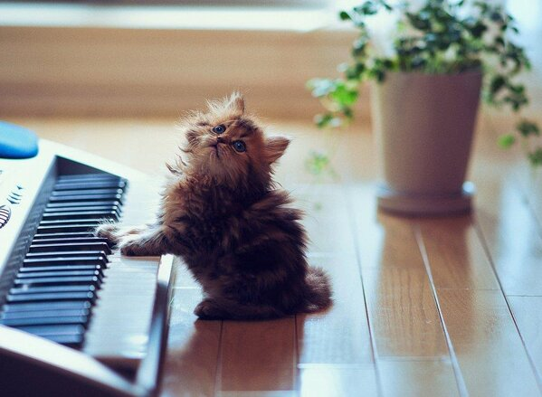 Kitten, learning how to play piano. http://t.co/0od1cN3wNw