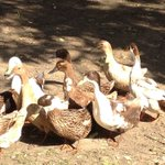 Ducktales on the set ....... Had a great quacking time!