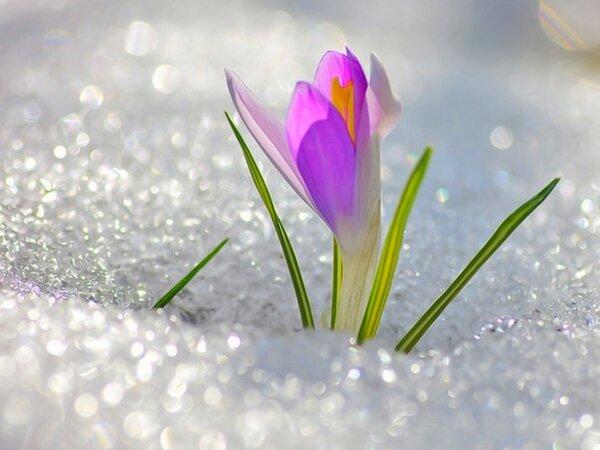 С первым днем весны Вас! http://t.co/Cgr2BO7HRR