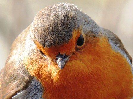a Robin http://t.co/4kdtNUl6bv