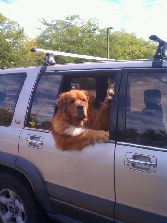 Picture: The greatest ever impersonation of Harry Redknapp by a dog