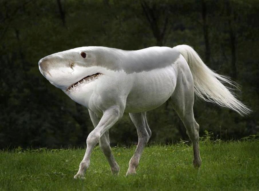 Half shark half horse - photo#1