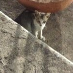 Spotted this cute kitten at the CCI, Mumbai. #tucc http://t.co/MLQqpsKAZ4
