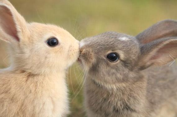 Bunnies, smoochin' http://t.co/vjOLqynuLD