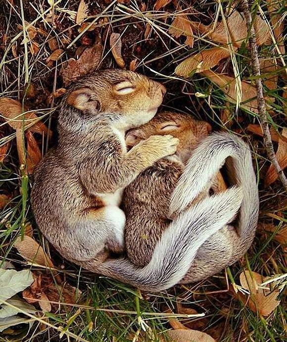Cute sleeping squirrels! http://t.co/W9Onq63jrv