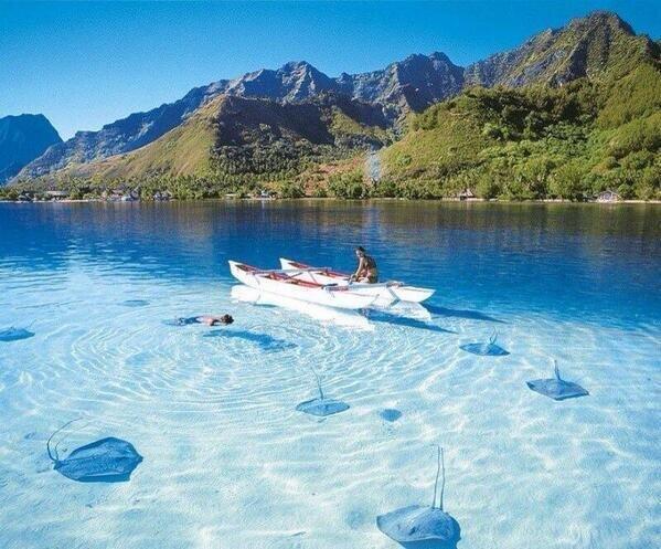 Bora Bora. Increíble la transparencia del agua. Se ven perfectamente las mantas. http://t.co/VRmuZJBUOh