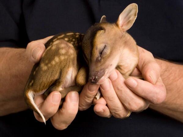 Baby deer. http://t.co/y2usjPXBpK
