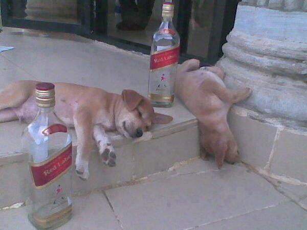 Ugh, what happened last night. Jerry, come on man Jerry you're upside down again. We gotta stop doing this... http://t.co/QiwC4YkZhE