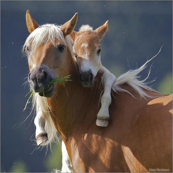 Mama! http://t.co/Bf6AtDKFUy
