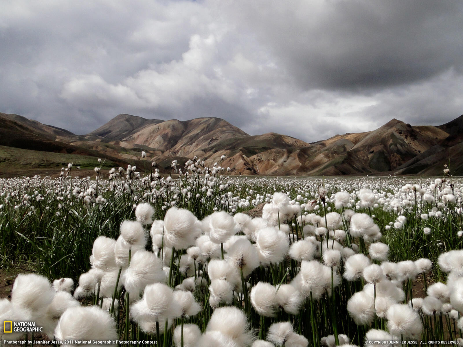 A Beautiful Field of Cotton Grass in Iceland http://t.co/rOc48U6ehB
