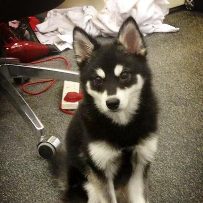OMG!! Have you seen the latest member of @OneDirection?! How much do you LOVE @Real_Liam_Payne's new puppy? –1D3DHQ x http://t.co/pHkr2qFf6a