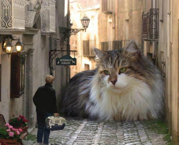 RT @masterkillercat: @zen4zoey @TeraEuro ;-) #cats #catcontent #mycatyourcat #catlover http://t.co/Zry8ROgOtO