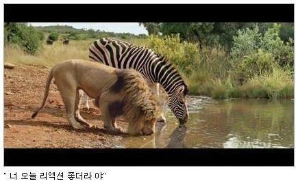 RT @JongBeom: 동물의 왕국 촬영 중 휴식시간 http://t.co/ylcQqm2ElR