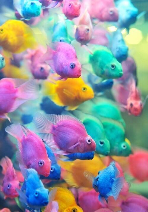 #صورة لأسماك القوس قزح وهي من أجمل أنواع الأسماك وتتميز بألوانها الجذابه | http://t.co/Ia8qGsUhmC