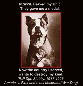 Know the facts. Educate don't discriminate. Many #pitbulls are heroes: #stubby  #endBSL #military #savelives https://t.co/502YfP8lgG
