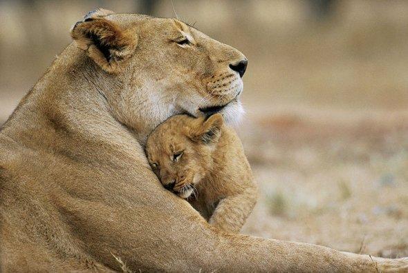 Unconditional love~ http://t.co/CwhfheNeVT via @Swildlifepics