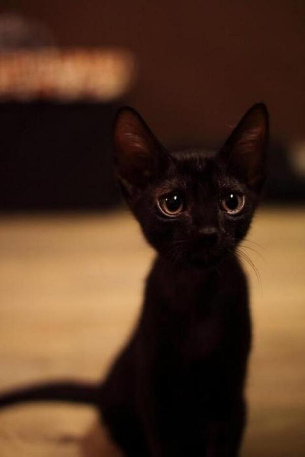 Black little kitty is cute! http://t.co/fcups9iF4N