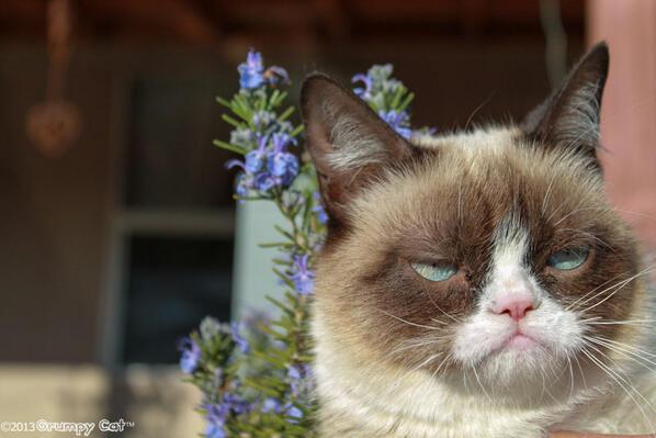 #grumpycat http://t.co/ghnqpzZEXy