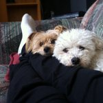 RT @Marni14: @bgtennisnation here is Charlie and chester