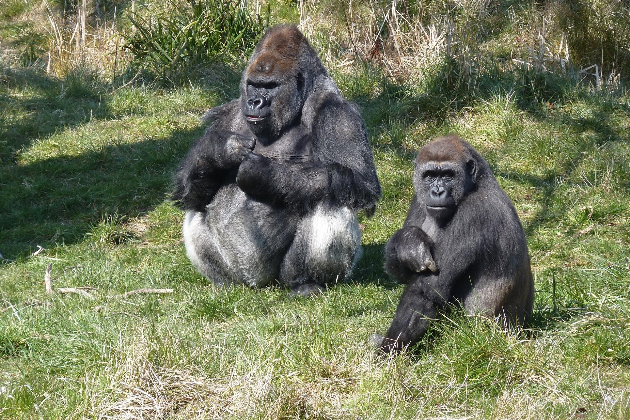RT @davidcorway: @DublinZoo Busy day in the Zoo today! http://t.co/P3IXG6qMOQ