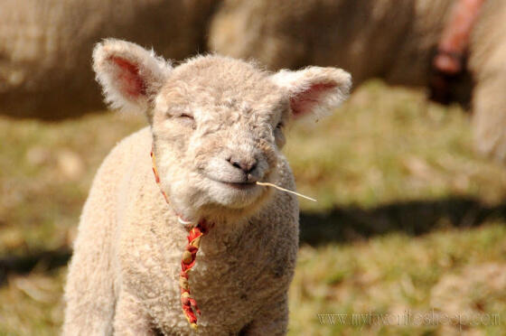 Oh...HI there! Today is National Farm Animuhls Day!  Enjoy! http://t.co/e5fXXypnq6