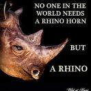 RT @debbiedoo22: Rhino Horn a picture !