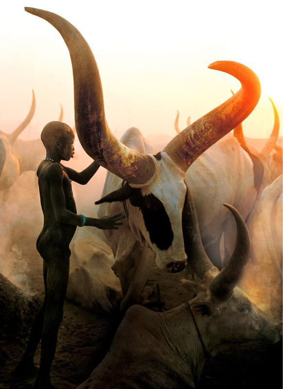 Photo of the day: Young Dinka boy from South Sudan with his long haired bull. http://t.co/rGZOVZeaV7