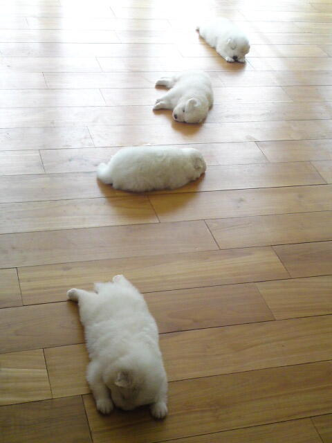 Puppies, failing dance class. http://t.co/Lj7NSoqNR7