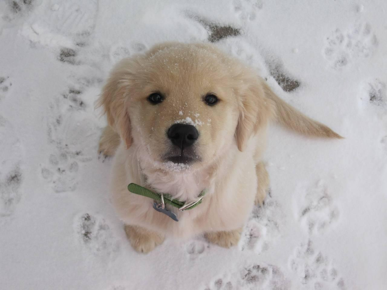 Dog, in the snow. http://t.co/2wTV2GctAX