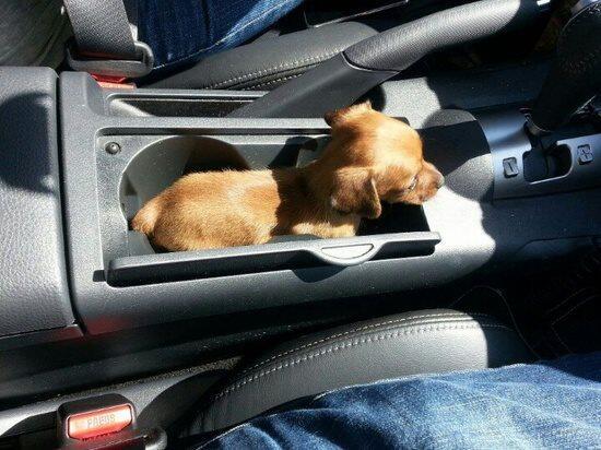 'Pup' Holder http://t.co/cV8fiNIlbR